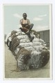Out on Bale (NYPL b12647398-68804).tiff