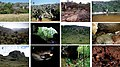 Outcrops and caves from Brazil (10.3897-zookeys.737.20307) Figure 4.jpg