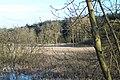 Overgrown pond - geograph.org.uk - 532136.jpg