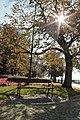 Płock, park za katedrą.jpg