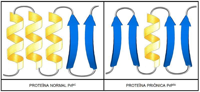 File:PRPCvsPRPSC.jpg