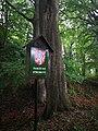 Památné stromoví Bransoudov 10.jpg