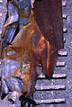 Paolo Monti - Serie fotografica (Anzola d'Ossola, 1981) - BEIC 6334813.jpg
