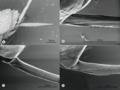 Parasite170127-fig6 ovipositor Pimplinae.png