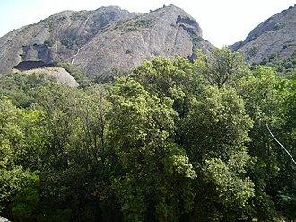 Parc du Mugel - Le Bec D'Aigle, and native Provençal Oak Trees