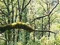 Parque Nacional da Peneda-Gerês (236972408).jpg
