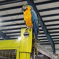 Parrots in the exhibition hall.JPG
