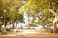 Passeio Público, vista próxima a entrada da Rua Dr. João Moreira.JPG
