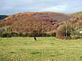 Pasture in the Dyfi Valley - geograph.org.uk - 606060.jpg