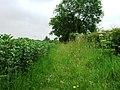 Path beside Beans - geograph.org.uk - 464479.jpg
