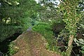 Path between the streams - geograph.org.uk - 967184.jpg