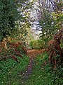 Path from Leapgate Country Park to Wilden Lane, Stourport-on-Severn - geograph.org.uk - 1567092.jpg