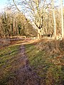 Path in Savernake Forest - geograph.org.uk - 875783.jpg