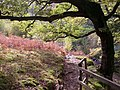 Path to Aira Force up the eastern side of the ravine, Watermillock township, Matterdale CP - geograph.org.uk - 280234.jpg