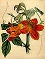 Paxton's flower garden (Plate 104) (9256205006).jpg