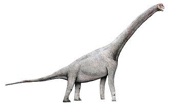 Pelorosaurus - Recreation