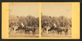 People in coach with African American coachman, from Robert N. Dennis collection of stereoscopic views 2.png