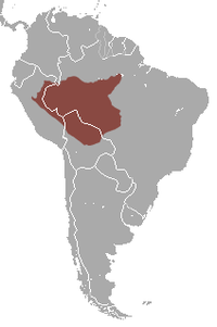 Peruvian Spider Monkey area.png