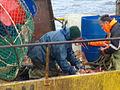 Pesca de centolla en la Bahía Ushuaia 36.JPG