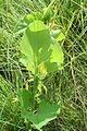 Pflanze (Alice Chodura) 18.JPG