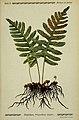 Pflanzen der Heimat (Tafel 77) (6099933804).jpg