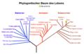 Phylogenetischer Baum des Lebens.png