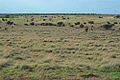 Pic 1 grassland L.jpg