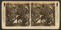 Picking cotton in a great plantation in North Carolina, U.S.A, from Robert N. Dennis collection of stereoscopic views 2.png
