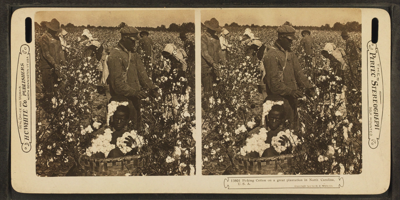 File:Picking cotton in a great plantation in North Carolina, U.S.A, from Robert N. Dennis collection of stereoscopic views 2.png