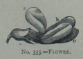 Picture Natural History - No 333 - Flower.png