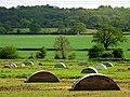Pig Farming Near Bucklebury - geograph.org.uk - 7354.jpg
