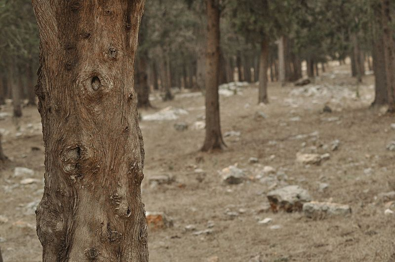 יער ציפורי