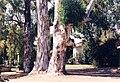 PikiWiki Israel 3839 Gan-Shmuel zk19- 122.jpg