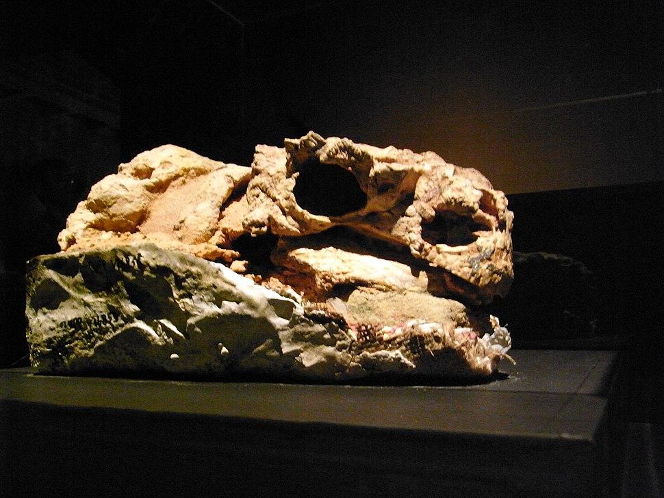 Pinacosaurus in Japan