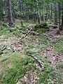 Pod Farským lesem 19.jpg