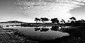 Pond (67566628).jpg