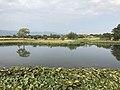 Pond in Yoshinogari Historical Park 2.jpg