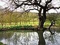 Pond near Bepton Church - geograph.org.uk - 736172.jpg