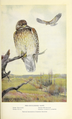 Portraits and Habits of Our Birds-1 0067.png