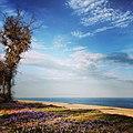 Primavera sul mare.jpg