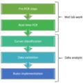 Process involving real-time PCR.png