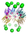 Proteasome cutaway 2.png