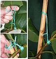 PrusikPflanze&Bambus.JPG