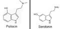 PsilocinVSserotonin22.png