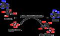 Purine-nucleoside phosphate ribosyltransferase.png