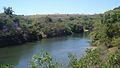 Quaresmeiras ás margens do Rio Araguari MG.jpg