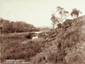 Queensland State Archives 2514 Con Taylors property at Bellevue c 1898.png