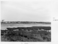 Queensland State Archives 6549 Reclamation at Tallebudgera July 1959.png