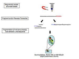 RNA-Seq - Image: RNA Seq Pics 2