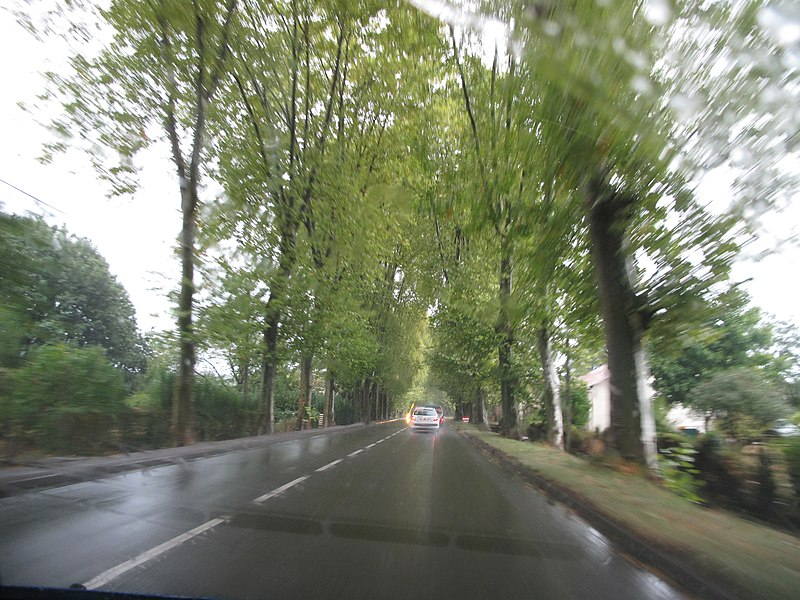 The National Road RN117 (or D817) between two ranks of tall plane-trees before Peyrehorade, Landes, France, driving to east